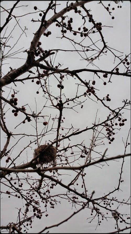 nest of happiness