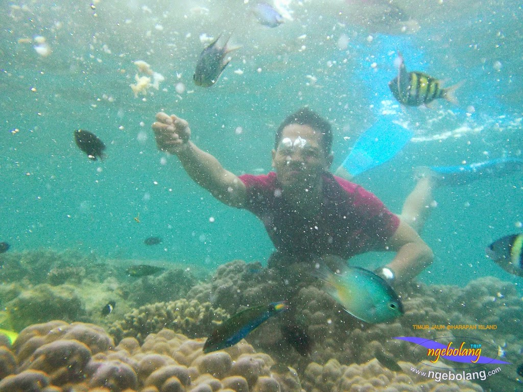pulau harapan timur jauh 29-30 nov 2014 caklung 20