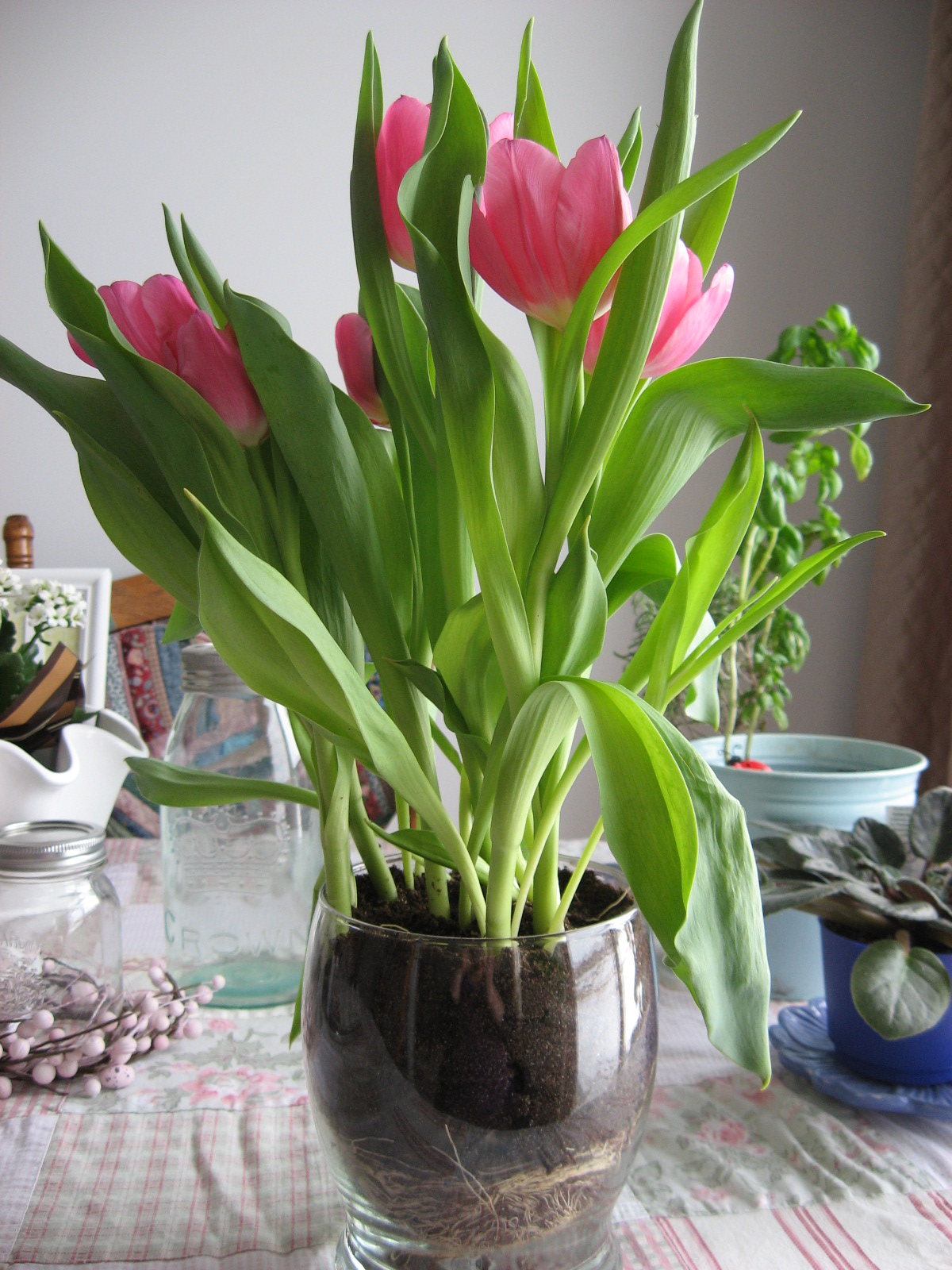 Color Crush On Tulips Blindsgalore Blog