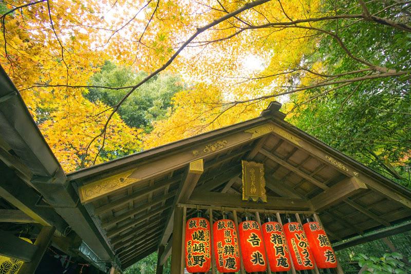 京都 野宮神社 紅葉 写真4