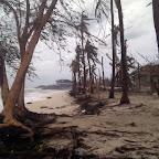 Damaged palm trees