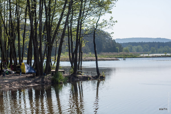 Місця для рибалки поміж дерев