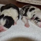 2013-10-16 pups Gina dag 2