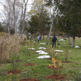 Hammo Fall Planting - Jim Murtagh - BC3G2547.jpg