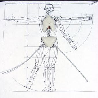 Modelado del cuerpo en proceso