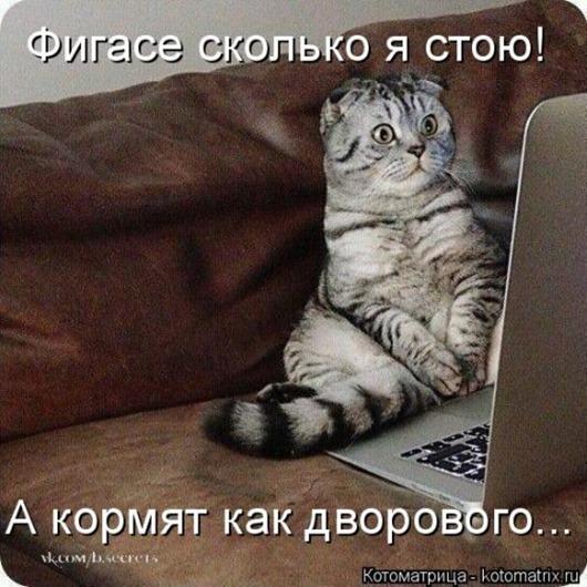 1423819018_kotomatricy-19