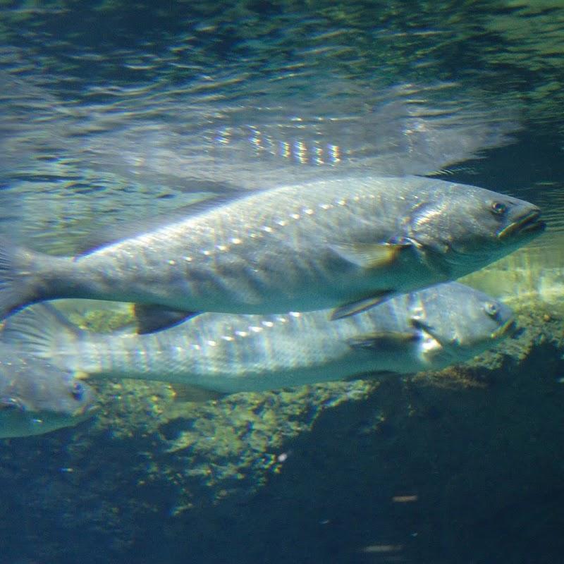 Aquarium_08.jpg