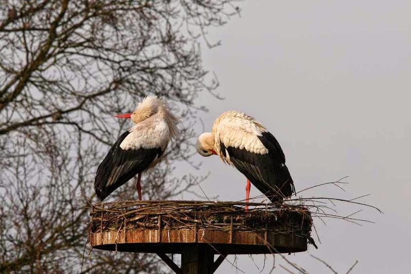 Vogels en dieren - IMG_5847.JPG