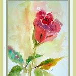 roseforpaige.jpg