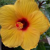 Gardening 2010 - 101_0899.JPG