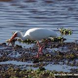 04-06-12 Myaka River State Park - IMGP9911.JPG