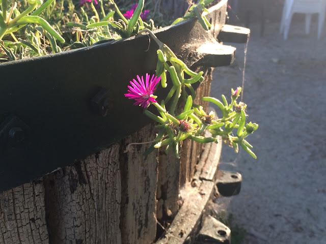 https://lh3.googleusercontent.com/-mKD6gD6mWDs/VeLvp8ikDnI/AAAAAAAACxw/JR0XB4rcpAg/s640-Ic42/Provence-fleur.jpg