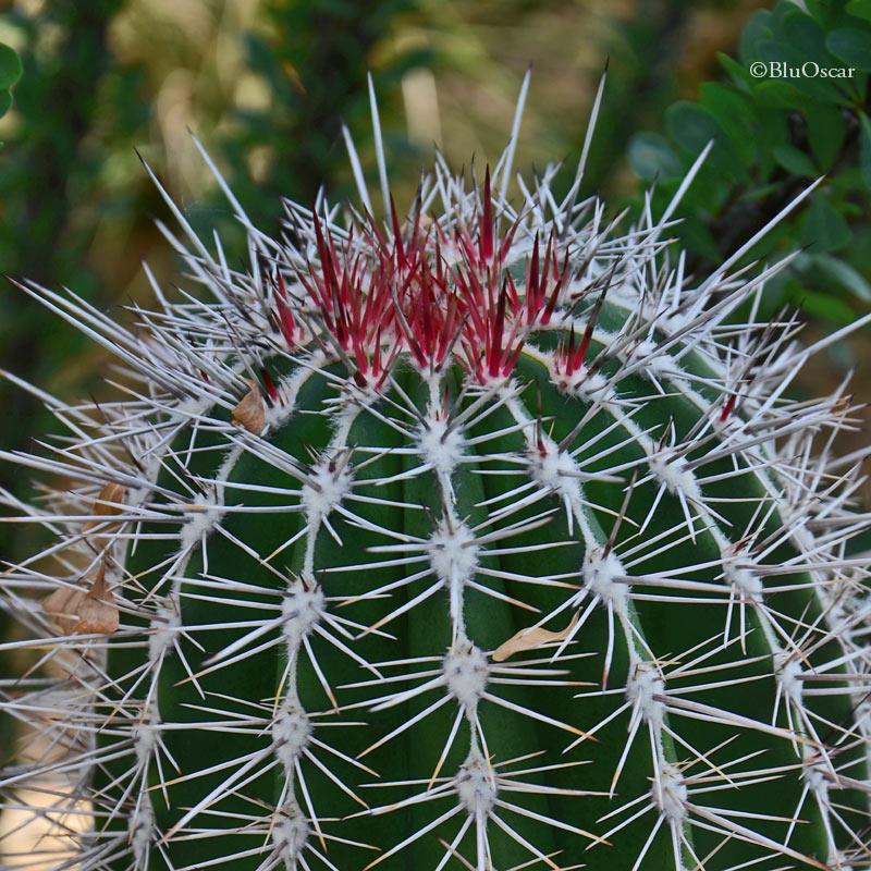 Orto Botanico Padova 07 06 2016 N 10