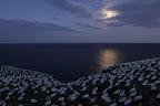 NUIT DE FOUS Clair de lune sur la colonie