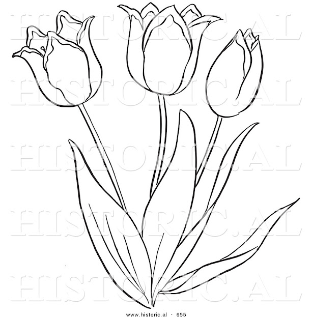 Cartoon Clipart Of An Outlined Tulip Flower Plant  Black And White Vector  Coloring Page By Picsburg