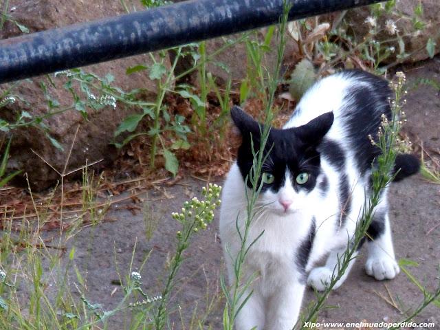 gatos-callejeros-roma.JPG