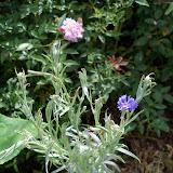 Gardening 2010, Part Three - 101_5001.JPG