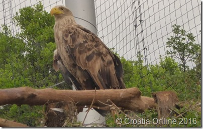 Croatia Online - Griffon Vulture Centar - Bird