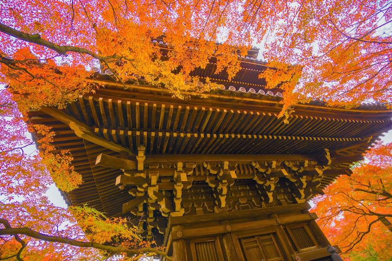京都 紅葉 真如堂 写真3