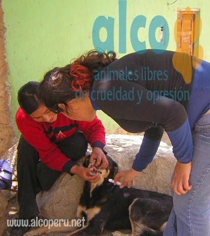Asistencia Huancavelica por terremoto 2007 (6)