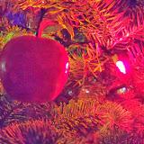 Christmas Lights - 115_9050.JPG