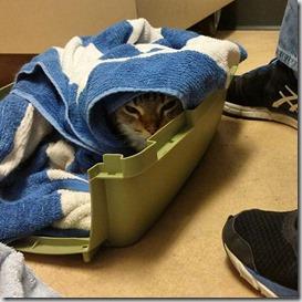 trasporto-gatto-consigli-utili