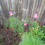 Gardening 2010, Part Two - 101_2061.JPG