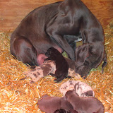 Saffy & her babies @ 2 weeks