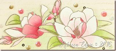 magnolia symp2