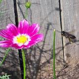 Gardening 2010, Part Two - 101_2494.JPG
