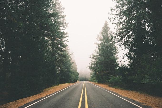 [road-street-forest-fog%5B3%5D]