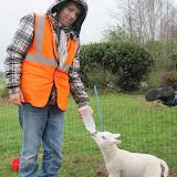 Welpen - Naar de boerderij - IMG_5512.JPG