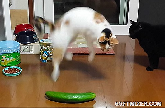 sourcefed--4404--people-are-scaring-cats-with-cucumbers--1447900032--large.thumb