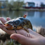 20140417_Fishing_Shpaniv_005.jpg