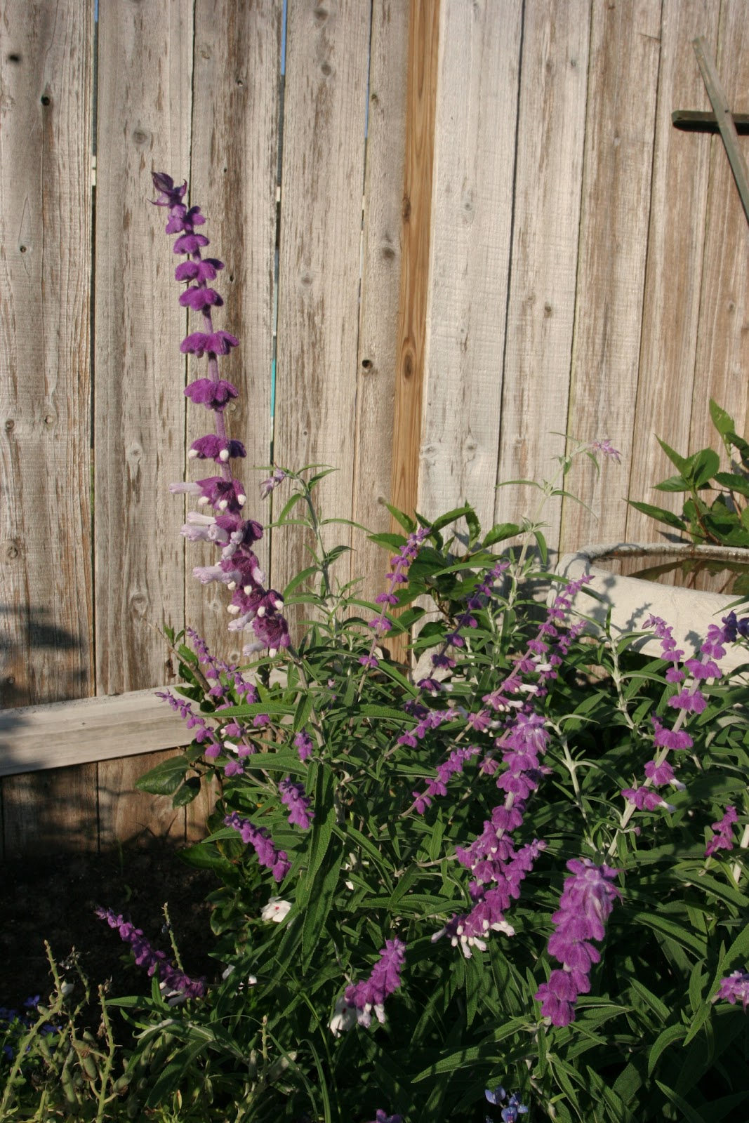 Gardening 2012 - IMG_2855.JPG