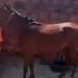 VÍDEO: LAJE QUEBRA, CAVALO CAI DENTRO DE QUARTO E ASSUSTA MORADORES