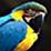 Burak Zeydan's profile photo
