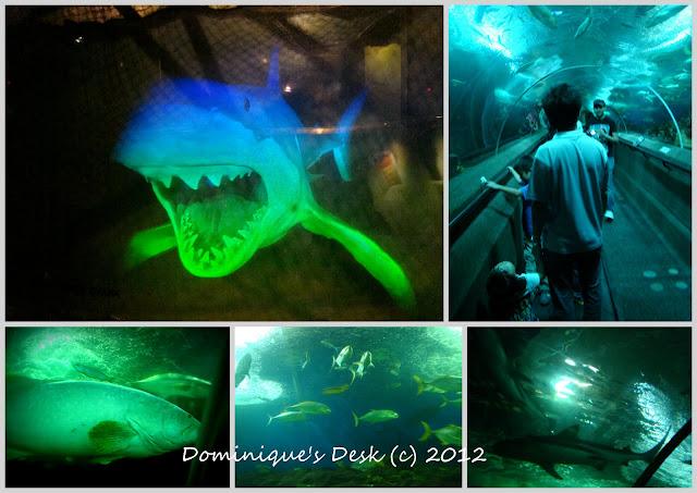 the underwater tank