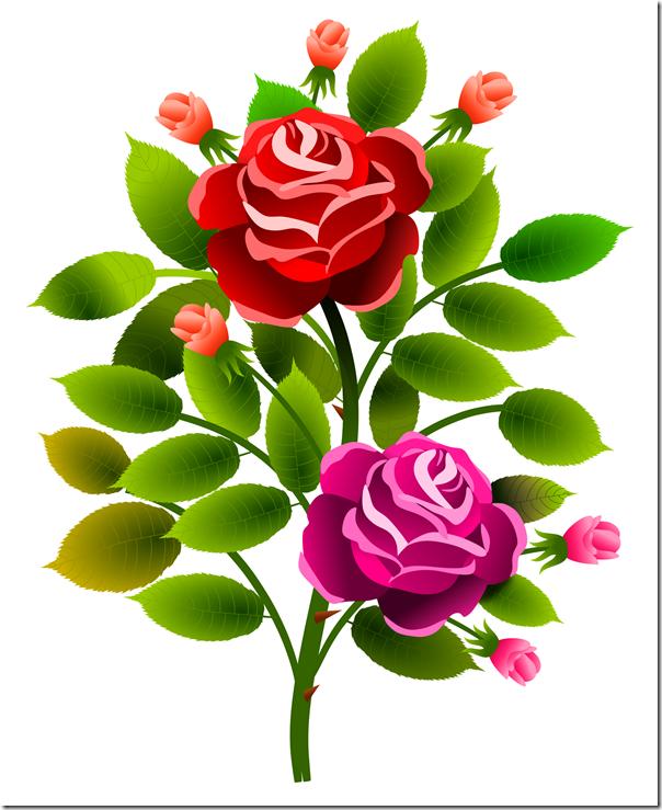 roses_13072017_2_aalmeidah