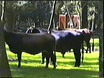 1998.09.19-001 aurochs