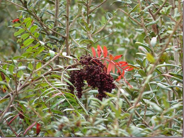 berriesIMG_9800