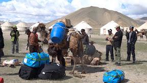 Prépa des chameaux