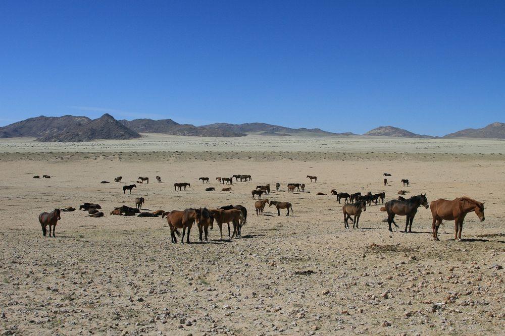 namib-desert-horse-5
