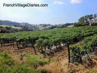 French Village Diaries piment d'espelette Pyrenees Pays basque France