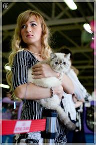 cats-show-24-03-2012-fife-spb-www.coonplanet.ru-012.jpg