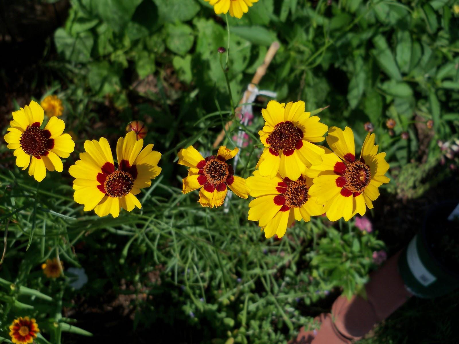 Gardening 2010, Part Three - 101_3942.JPG