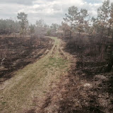 Anderson Creek Hunting Habitat - photo%2B5.JPG
