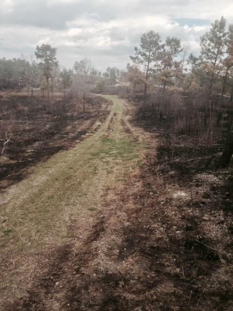 Anderson Creek Hunting Habitat - photo%2525205.JPG