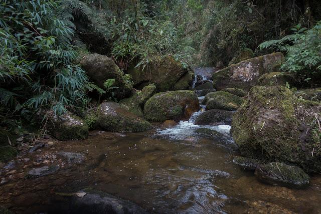 Vers la cascade El Chiflón, Choachi, 2500 m (Cundinamarca, Colombie), 26 novembre 2015. Photo : C. Basset