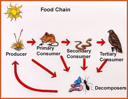 Jhoy Mark My Name In Your Heart Lol Jk Food Chains Food Webs